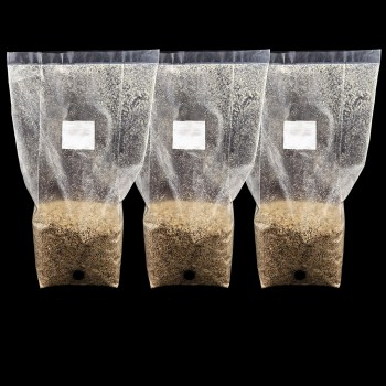 Pre Sterilized PF Tek Injection port Bags x 3 - BRF Vermiculite Free Shipping