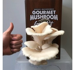 Mushroom Spawn bag 2kg  Pleurotus ostreatus Winter White Oyster - FREE SHIPPING