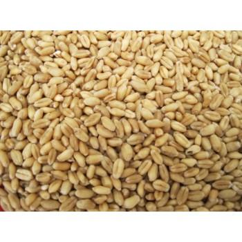 Wheat Grain 5KG Bag